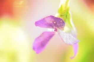 Small Plants by The Haiku Project video by Ireneusz Cyranek